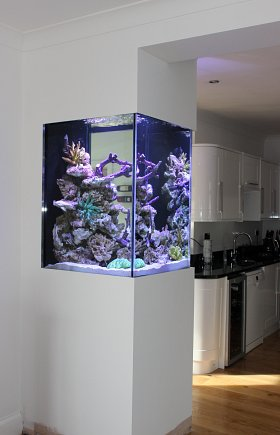 Bespoke Build Wall Aquarium