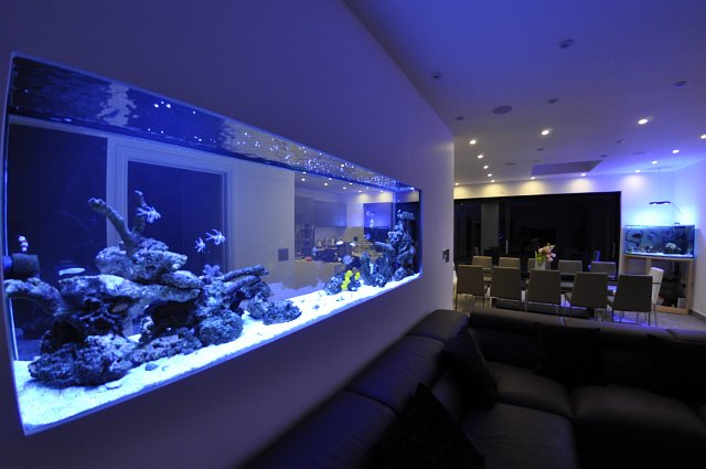 how to build a fish tank in the wall