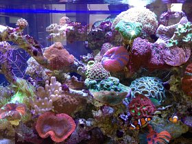 Coral Reef Aquarium Maintenance